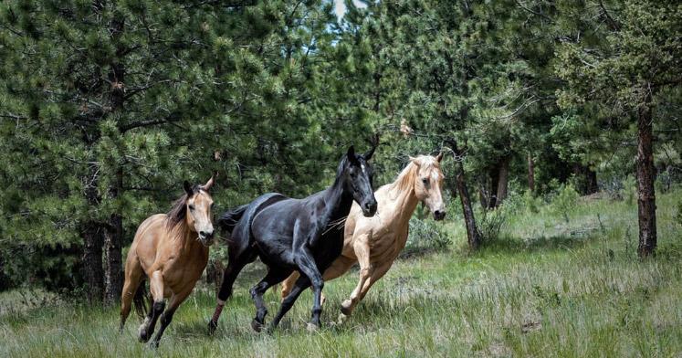 Photo of running horses representative of equine news summer 2017.