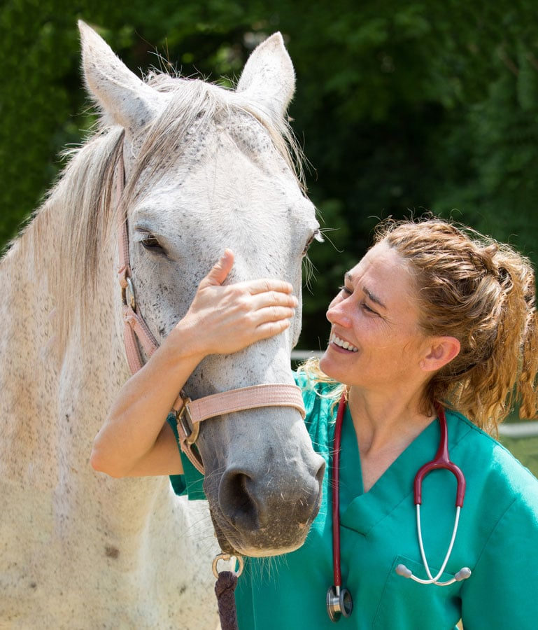 Photo of horse and vet representative of equine herpes virus.