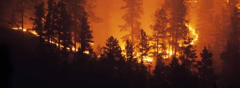 Trees burning representative of UC Davis response to the Camp Fire