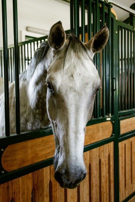 Image of a horse in stall for deworming.