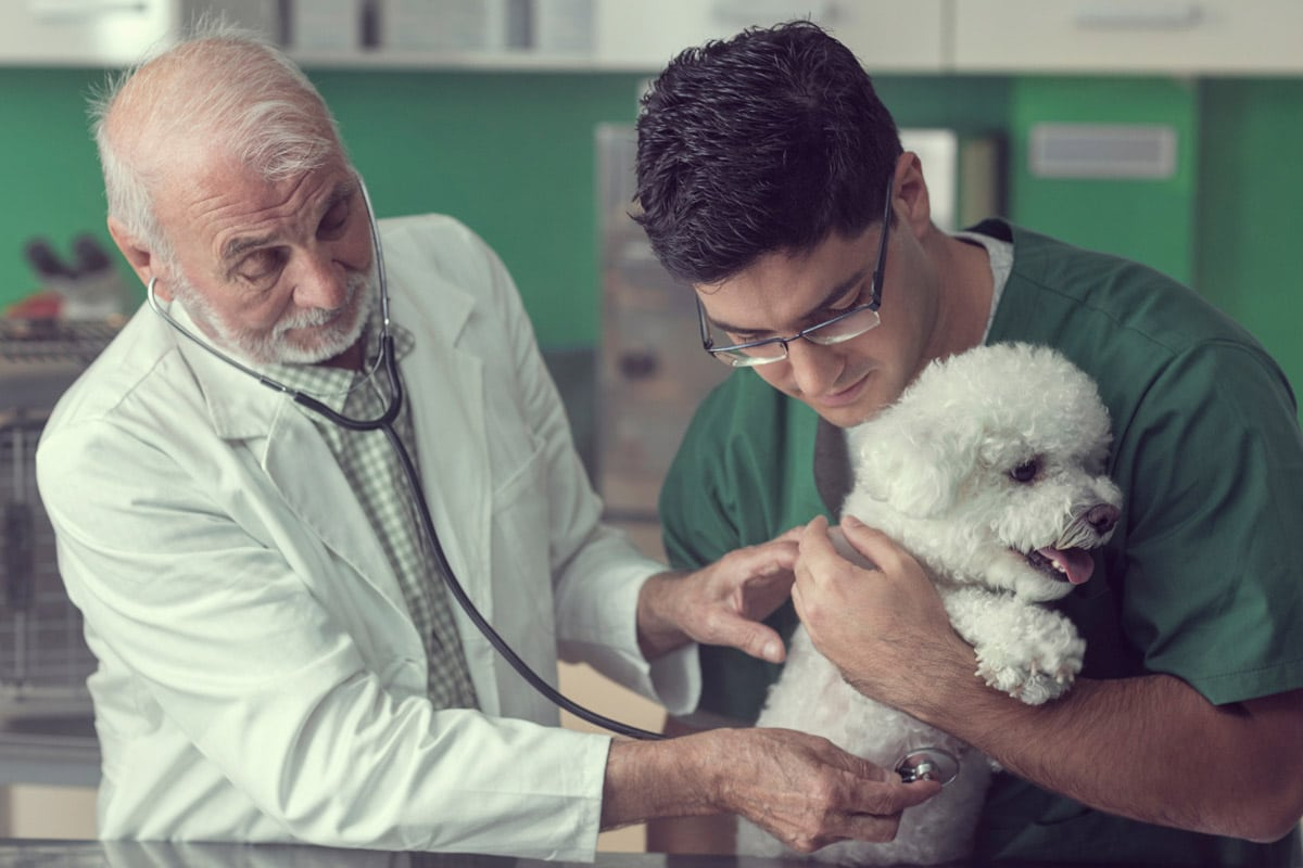 Photo of boomer vet with millennial technician examining a dog.