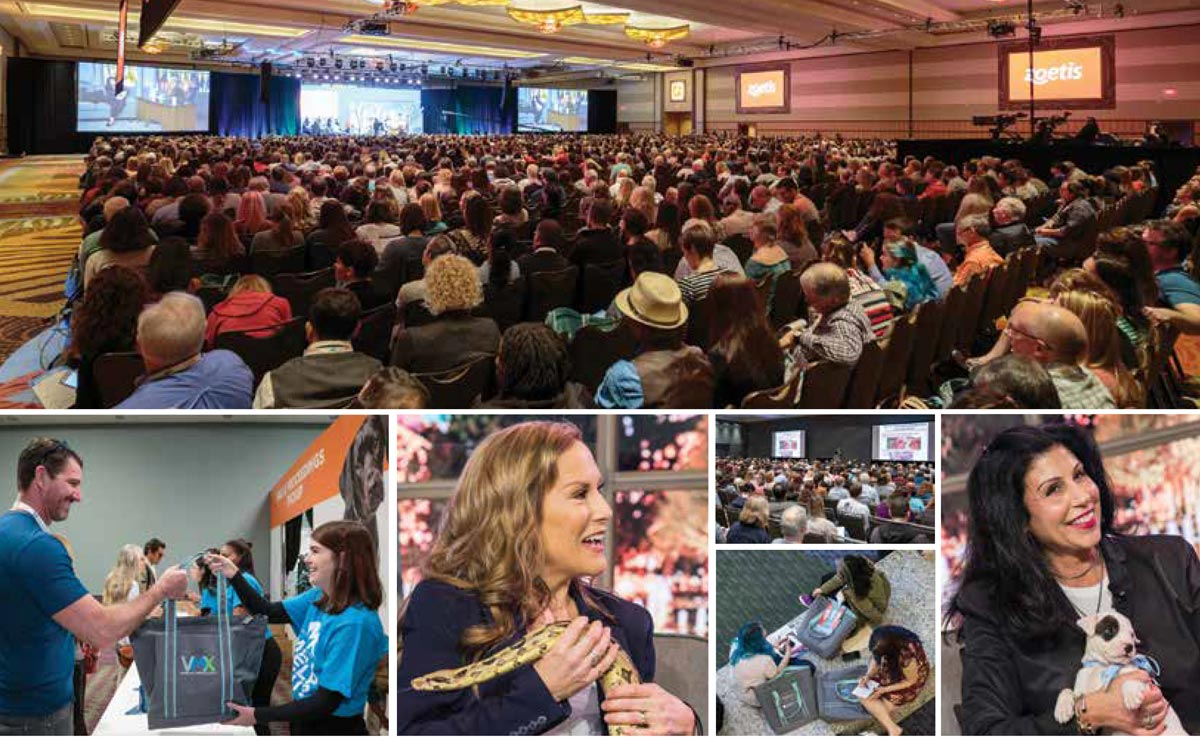 Montage of photos from VMX 2019.