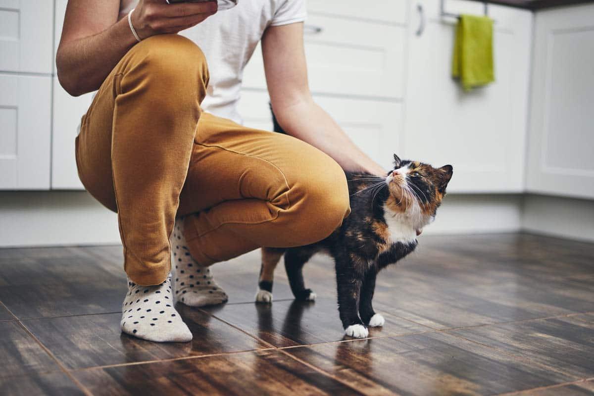 Image of parent petting their cat.