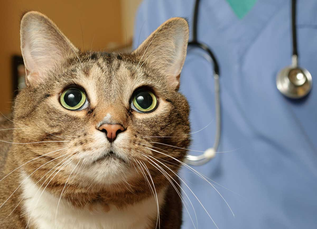photo of cat's face at the vet representative to breaking down barriers to oncology treatments