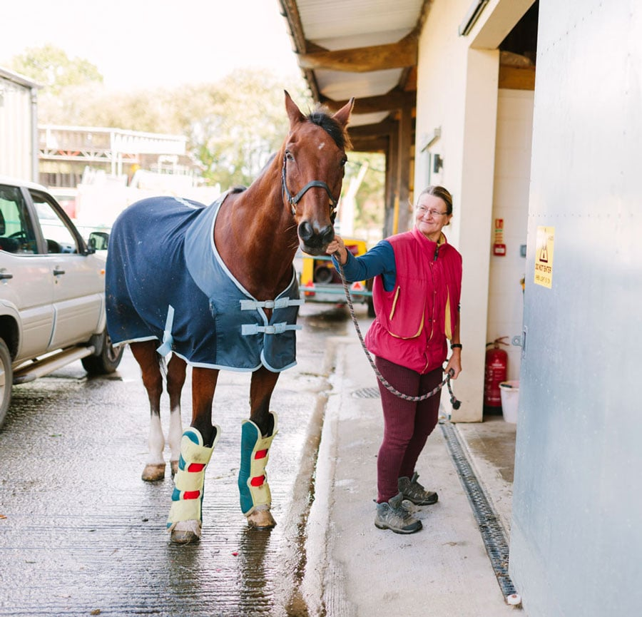 Photo of racehorse and handler by paddock.
