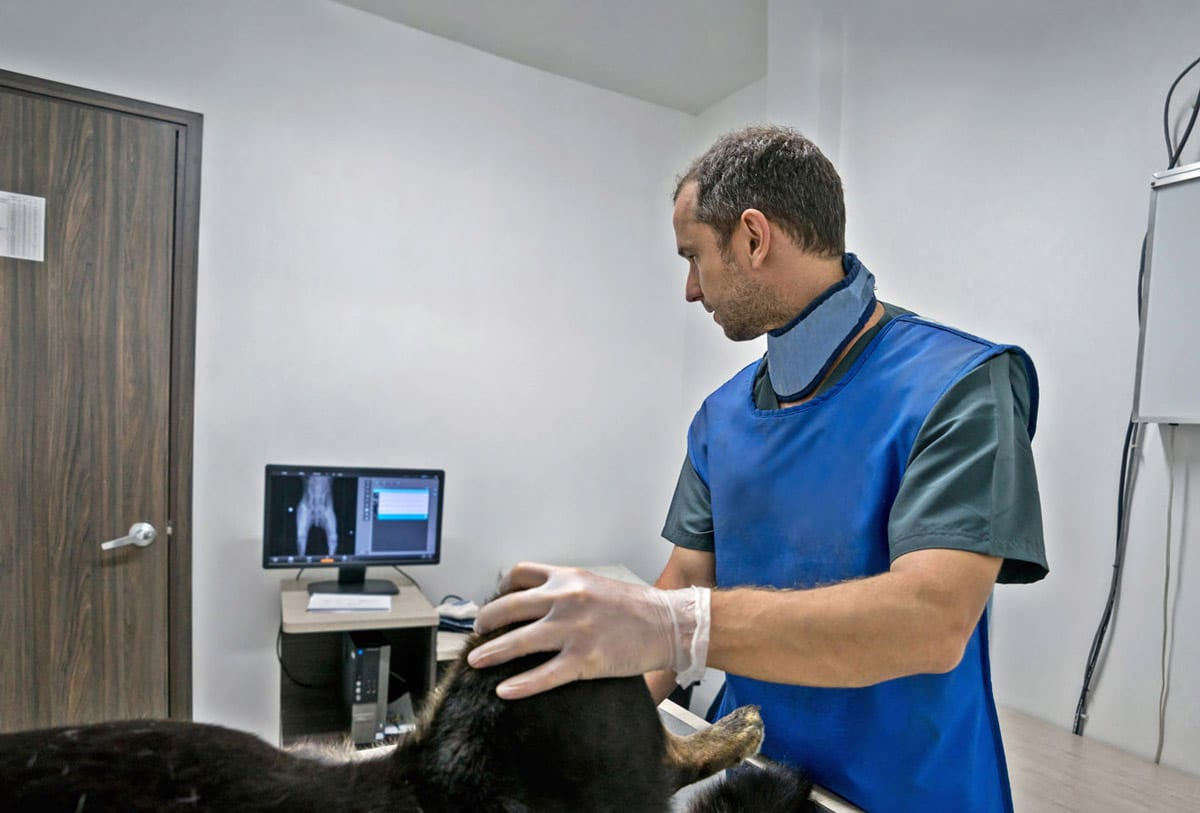 Image of a vet or vet nurse using veterinary capital equipment on a dog.