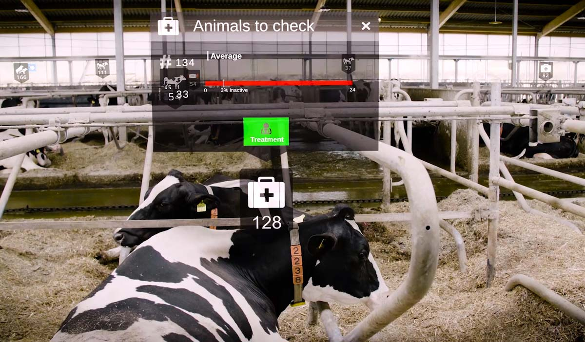Photo of augmented reality being used within a dairy farm.