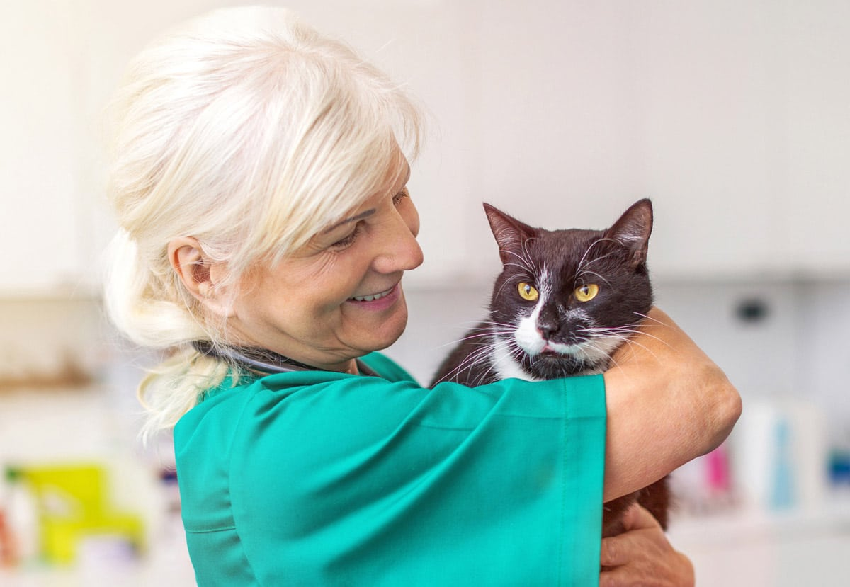 Photo of veterinary nurse holding a cat. Representative of the omnimarket.