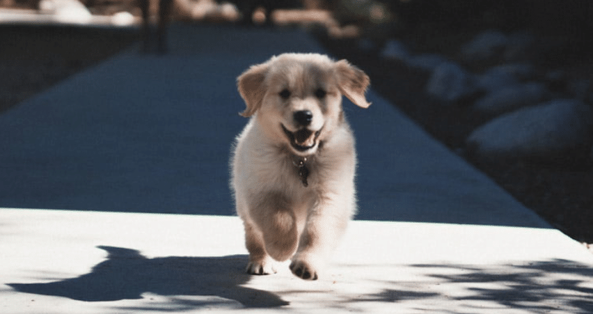 photo of running puppy representative of animal health directory