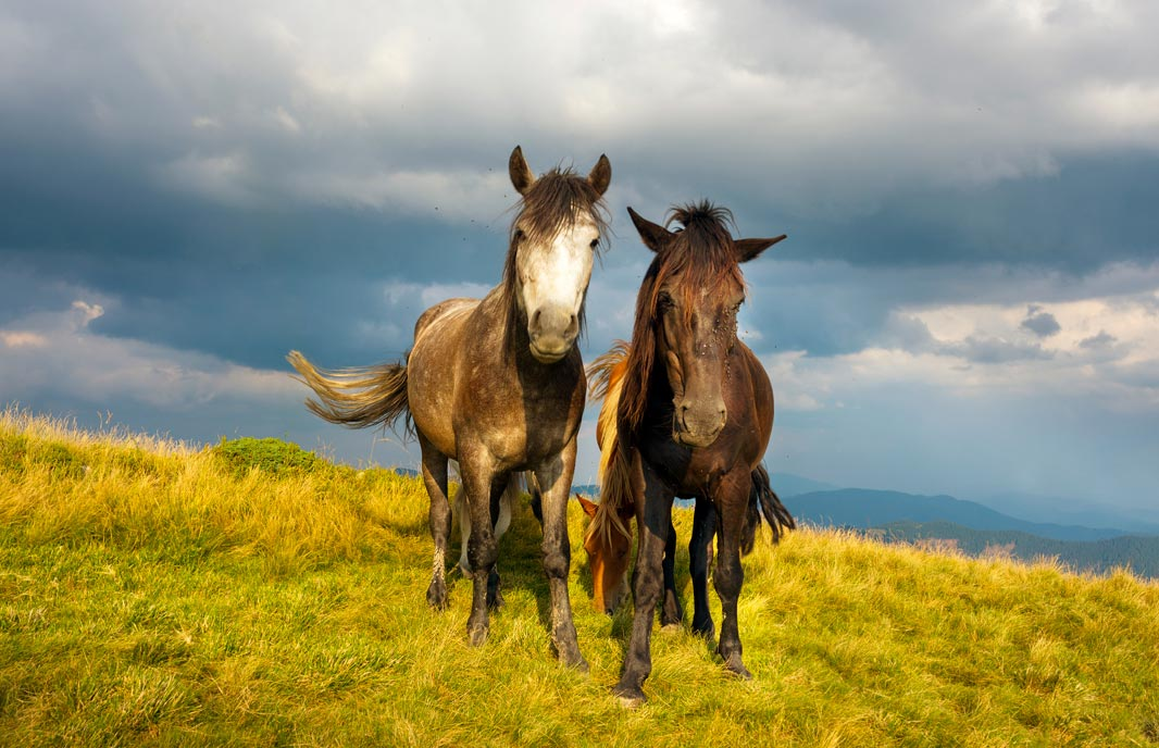 Photo of horses in mountain meadow representative of parasite control in horses
