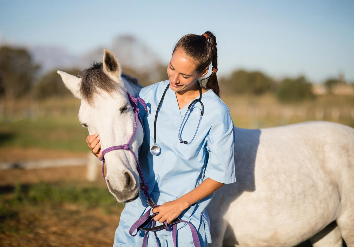 Photo of veterinary nurse and horse representative of equine herpesvirus.