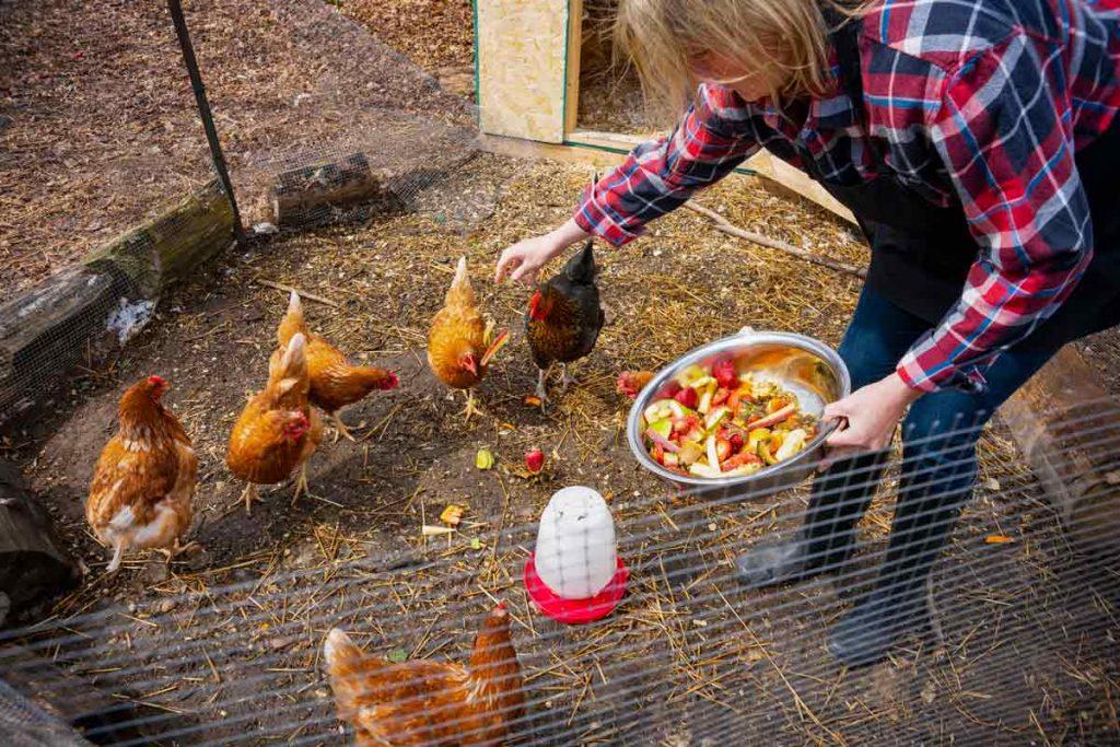 Photo of woman feeding chickens, representative of domestically farmed animals.