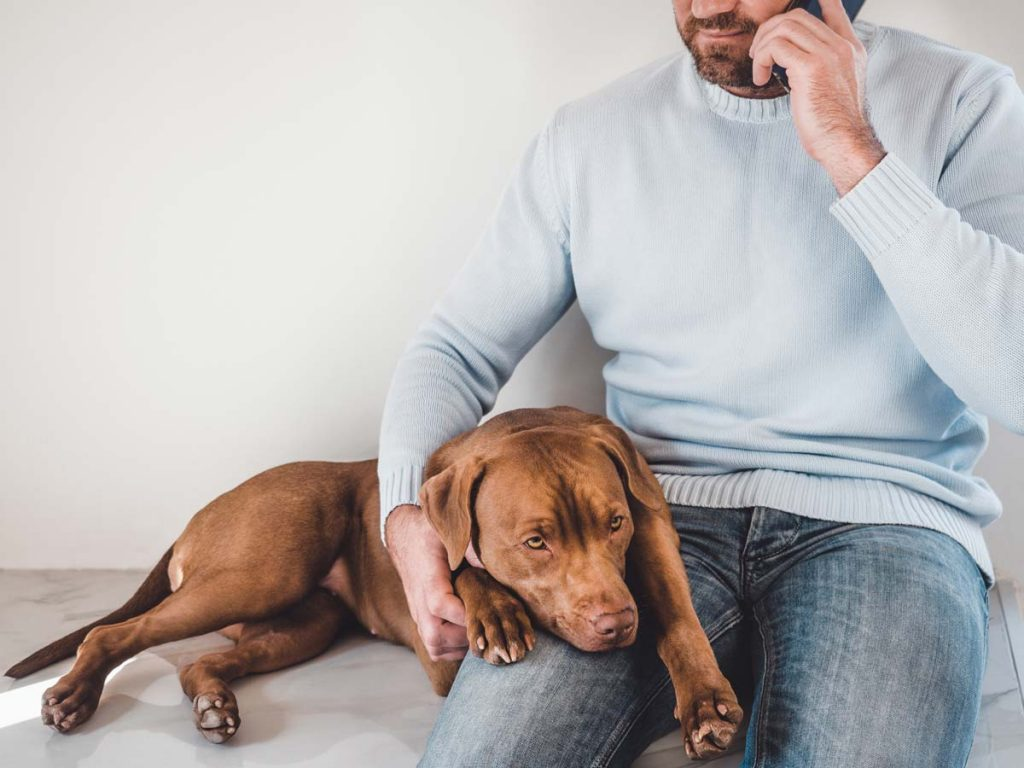 Photo of dog with head on owners lap, representative of animal dermatology.