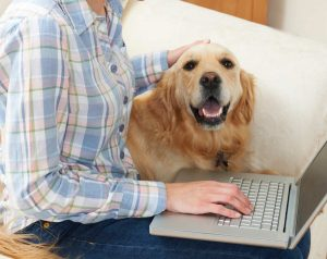 Photo of woman with computer and dog, representative of using Google for animal allergy treatments.