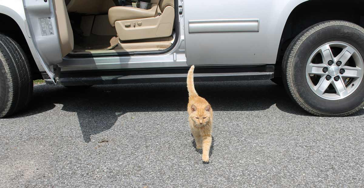 Photo of cat leaving vehicle during curbside check-in at vet clinic representative of veterinary technology.
