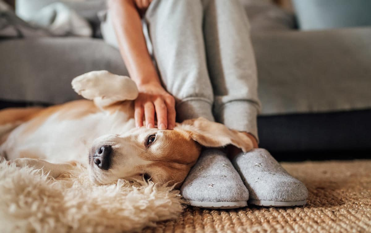 Photo of dog at owner's feet representative of time spent together and better senior pet care.