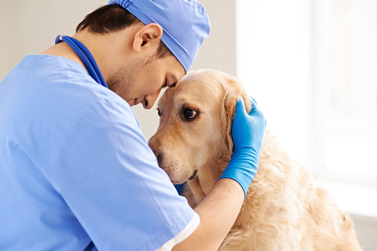 Photo of vet comforting a d dog representative of the rep-veterinarian relationship.