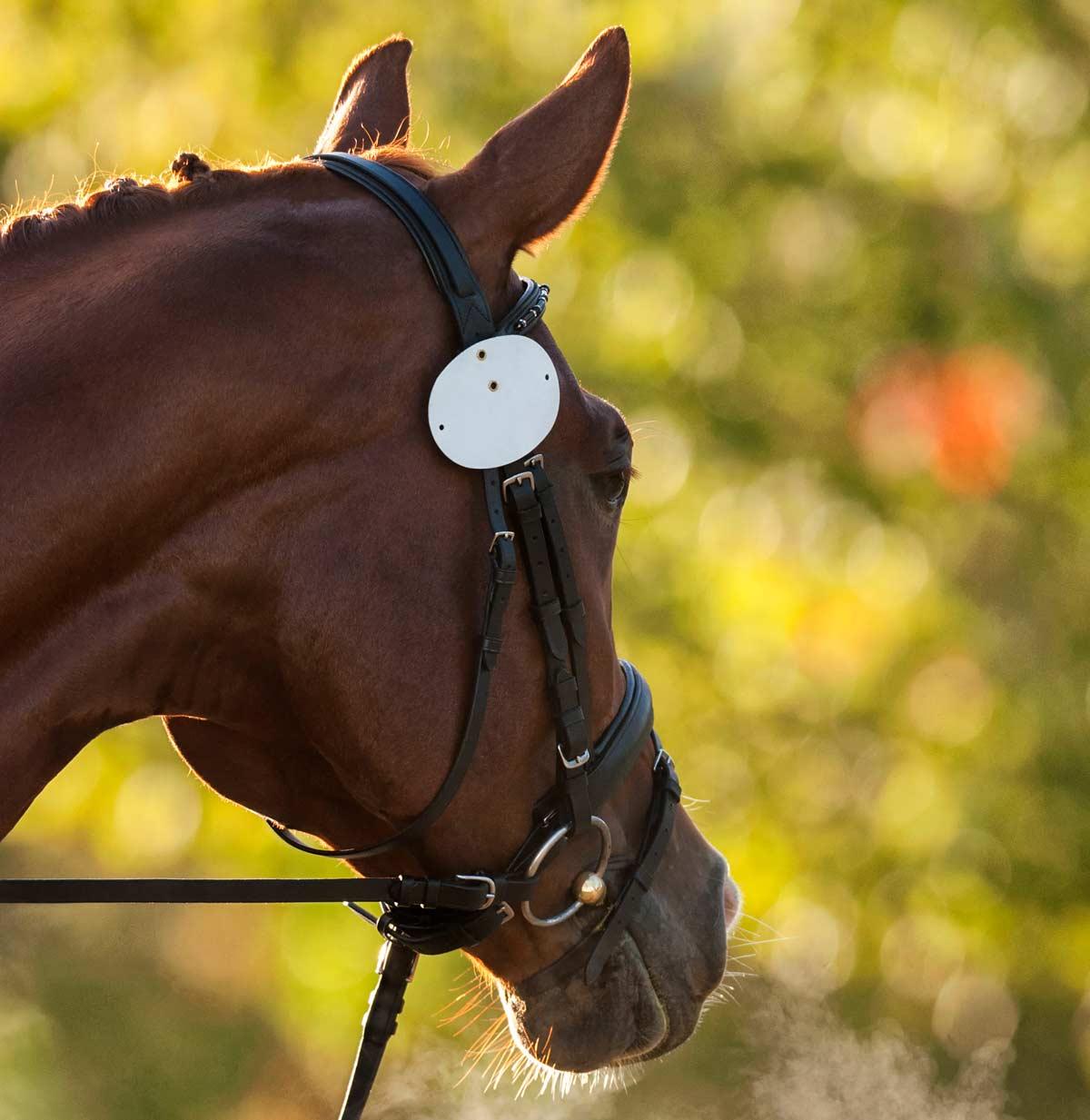 Photo of horse's head representative of equine asthma.