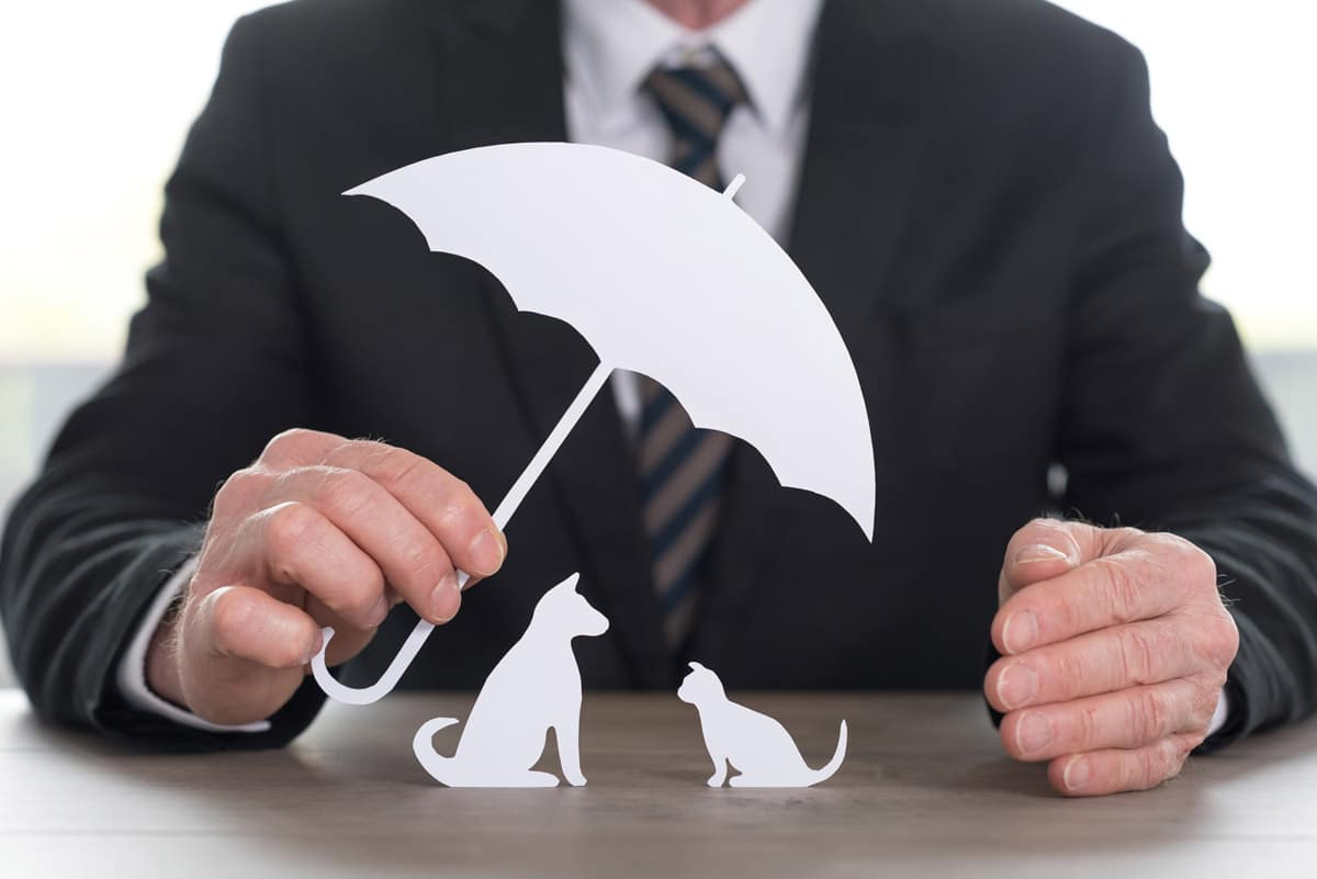 Photo of man holding paper umbrella over paper dog and cat representative of pet insurance and wellness plans.