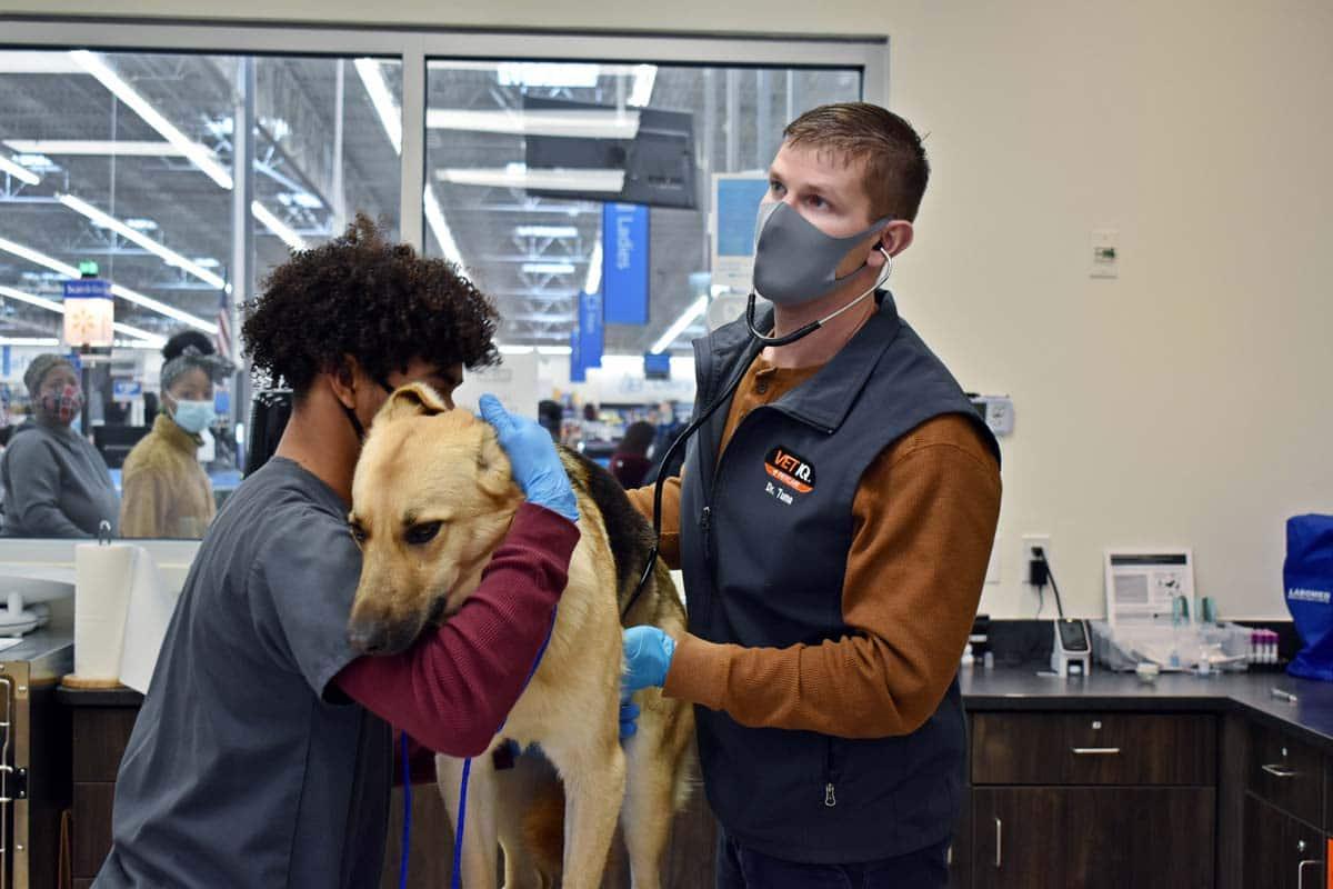 Photo of Veterinary nurse and Vet examining a dog representative of PetIQ's services.