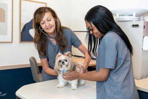 Bond Vet veterinary clinic vet, nurse, and dog in an exam room