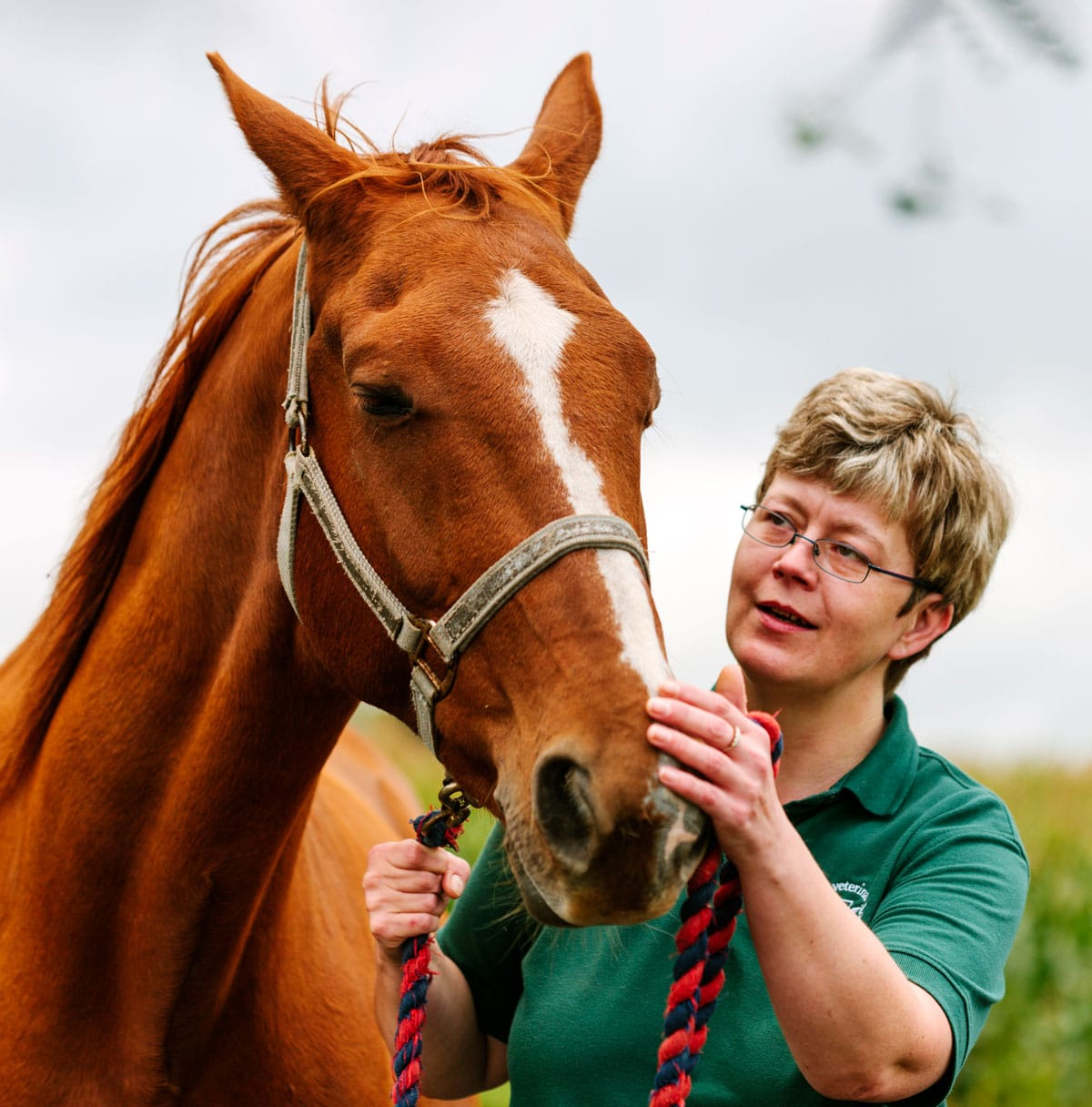 Photo of vet with horse representative of effective equine parasite control.