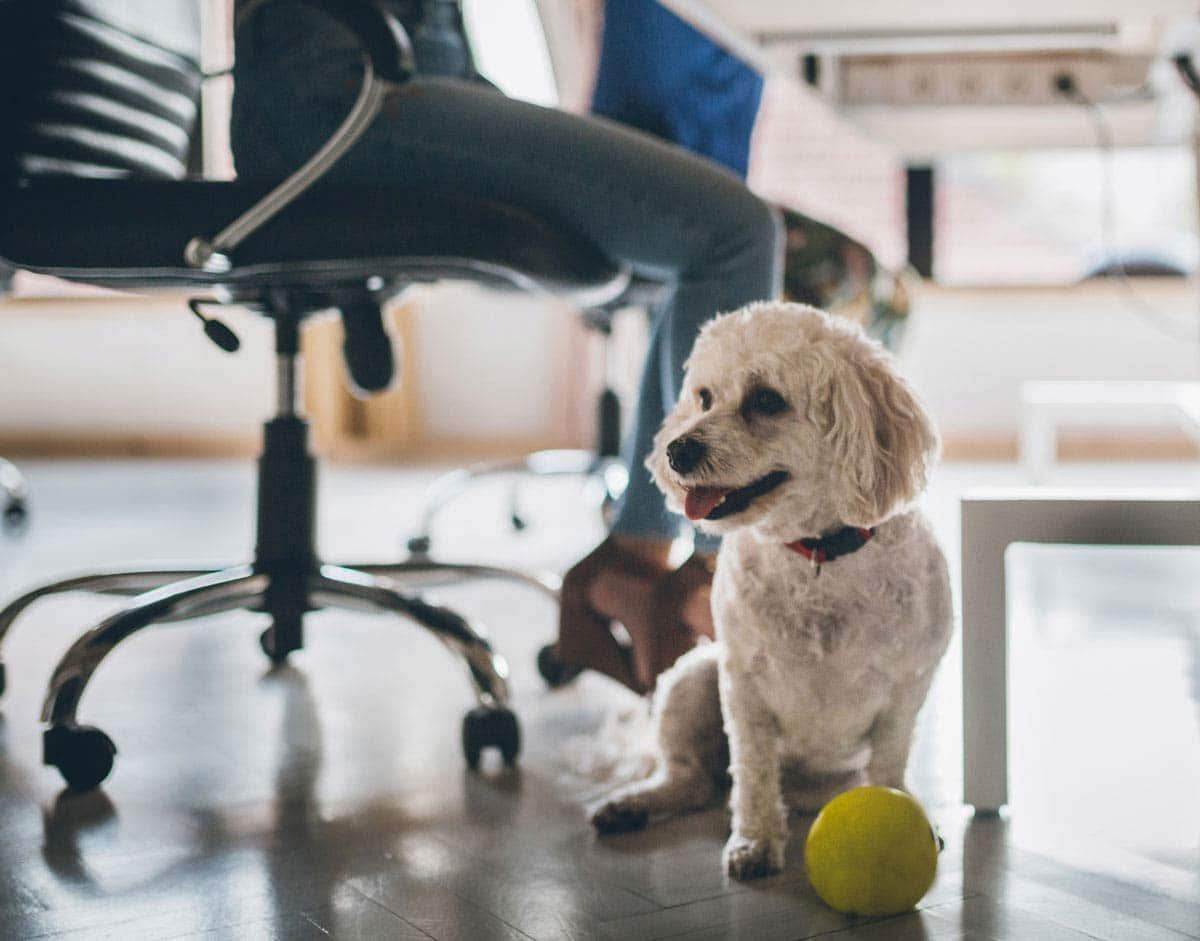 Photo of dog under a desk at a pet-friendly workplace.