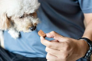 Photo of dog being fed a treat representative of companion animal parasite prevention.
