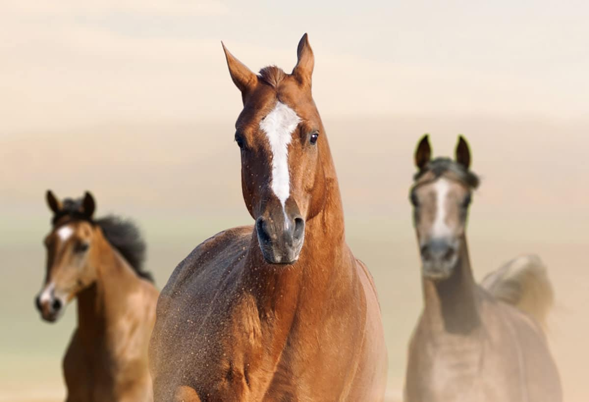Photo of horses running representative of equine events.