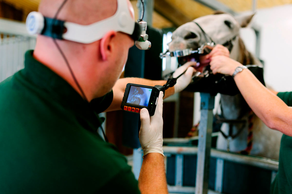 Photo of horse having its mouth examined by equine associate.