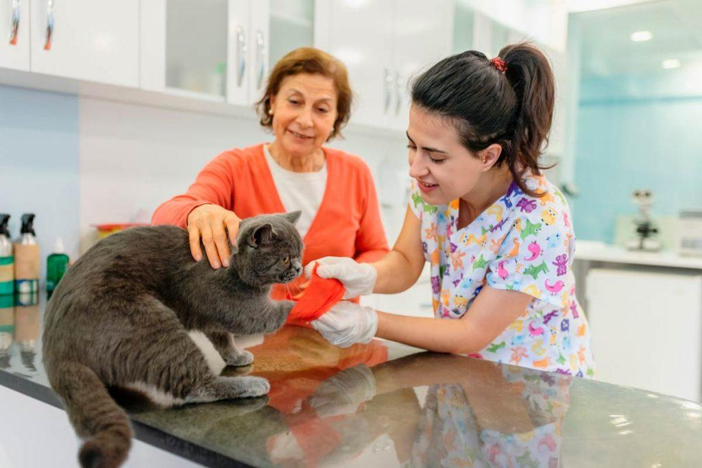 Photo of a cat having its paw bandaged representative of feline preventative care.