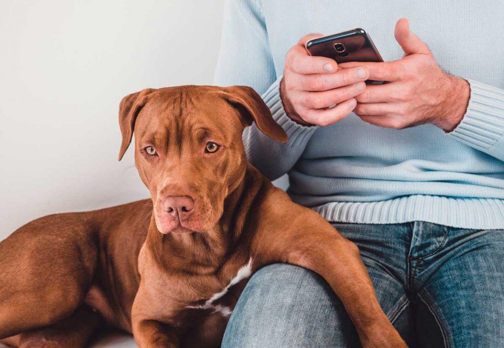 Dog waiting to see vet representative of pet dermatology.